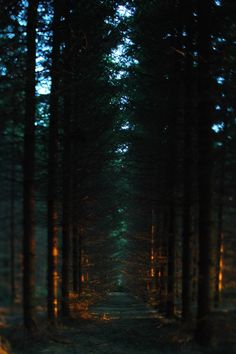 Dark Green Aesthetic, Night Aesthetic, Nature Aesthetic, Desktop Background Pictures, Slytherin Aesthetic, Forest Wallpaper, Forest Photography, Nature Pictures, Les Oeuvres