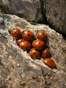 ladybug :)