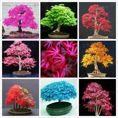 8 Tipi di Acero Giapponese Semi di Albero Bonsai Piante Da Giardino per la casa 20 Pz ogni tipo