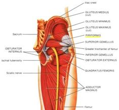 Piriformis Syndrome and Piriformis Muscle Stretches