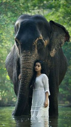 Wonderful creature....and IT was created so,so big.....because IT is an animal so kind,with a gold Soul and Immense memory.How could not  remember when You love IT or You  ill-treat IT???