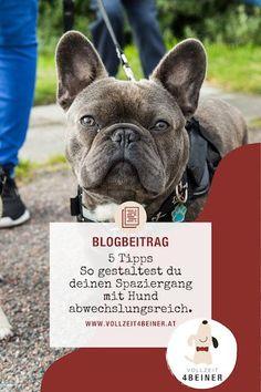 5 Ideen für einen abwechslungsreichen Spaziergang mit Hund   miDoggy Community Adoption, Bullying, French Bulldog, Dogs, Animals, Dog Accessories, Animals Dog, Pooch Workout, Challenges