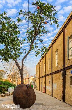 Hovering Orange Tree - Jaffa, Israel