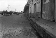 Armazéns do Porto do Recife, Vendo-se ao Fundo o Prédio da Administração das Docas do Porto que Foi Demolido, Recife 1947.  Foto: Stanley Mierzwa.