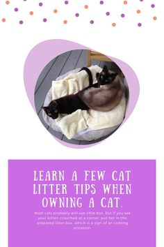 Cat Litter Advice You Ought Not Skip Over ** Continue with the details at the image link. Cat Care Tips, Dog Care, Pumpkin Dog Treats, Pet Dogs, Pets, Cat Scratching Post, Owning A Cat, Homemade Dog Food, Cat Health