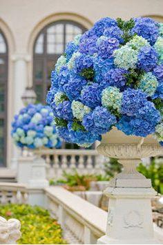 Blue Hydrangeas in Urn