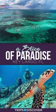 travel florida - Key Largo is Florida's Small Slice of Paradise Florida Usa, Visit Florida, Florida Vacation, Florida Travel, Florida Beaches, Travel Usa, The Florida Keys, Florida Theme Parks, Islamorada Florida