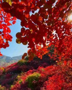 Beautiful Photos Of Nature, Nature Photos, Beautiful Landscapes, Beautiful Gardens, Wallpaper Nature Flowers, Flower Background Wallpaper, Beautiful Nature Wallpaper, Video Nature, Nature Gif