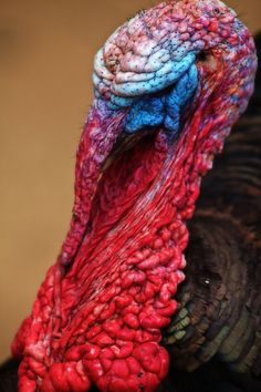 Turkey II by Ricardo  Alves, via 500px