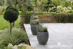 Zimozielony ogród przy białym domu - strona 228 - Forum ogrodnicze - Ogrodowisko