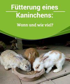 Woodstock, Rabbit, Bunny, Snoopy, Animals, Rabbit Treats, Guinea Pigs, House Rabbit, Pet Bunny Rabbits