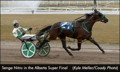 Catching Up With Alberta's Trainers Harness Racing, Horse Racing, Trainers, Waiting, Snow, Horses, Seasons, Thoughts, Animals