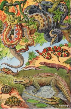 French Chart of Reptiles