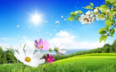 All Free Hd Desktop Wallpapers And Backgrounds With Spring Scene Flowers Green Field Nature Image Id