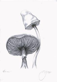 Mushroom Art Mushroom Drawing Mushroom Print black and white and grey pencil drawing by Emily Magone, $20 on Etsy