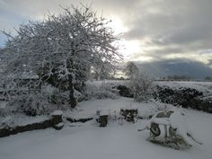 just after snowfall - the garden of our Shropshire home January 2018
