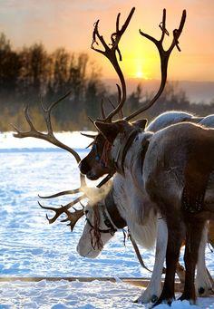 Вопрос 4. Lapland. Отдых в Лапландии всей семьёй, включая бабушек и дедушек.