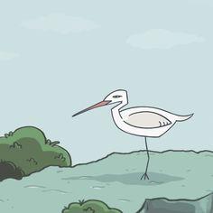 acloop — Birdbon The Transformer