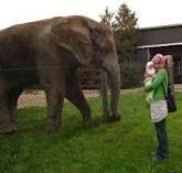 bowmanville zoo ontario -