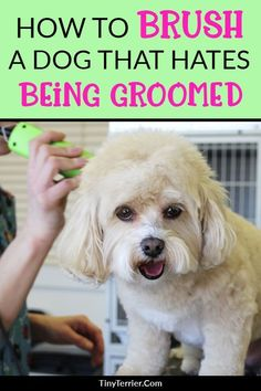 Training your dog is centered on building your relationship with your pet dog and establishing boundaries. Be firm but consistent and you'll see amazing results in your dog training adventures. Dog Grooming Styles, Dog Grooming Tips, Dog Grooming Supplies, Grooming Salon, Dog Supplies, Pet Care Tips, Dog Care, Pet Tips, Puppy Care