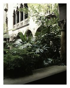 Luisa Lambri Untitled (Isabella Stewart Gardner Museum, 2008 Laserchrome Print Edition of 5 and 1 artist proof x inches x cm) Gardner Museum, 19th Century, Art Photography, Sculpture, Contemporary, Drawings, Plants, Painting, Artists