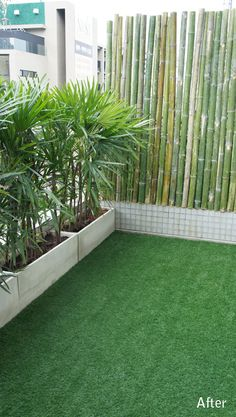 bangkok balcony designer - love this simple effect with bamboo and potted palms