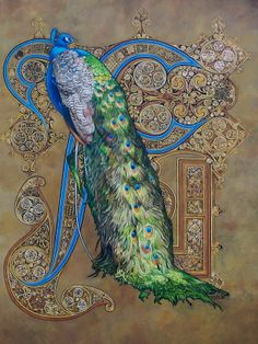 Kells style peacock I love illuminated manuscript letters, they are intricate, graceful, and full of whimsy.