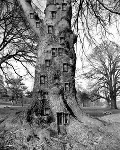 How this picture opens up your imagination.  A hollow tree filled with rooms of warmth and love with little gnomes or fairies frollicking around?