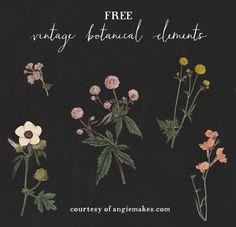 Free Vintage Botanical Graphics. Free Vintage Clip Art. Vintage Flower Clip Art   http://angiemakes.com