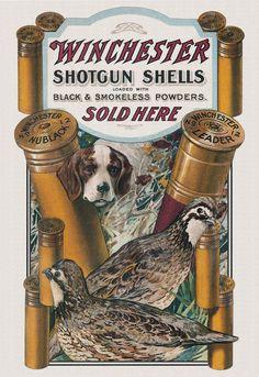 Vintage Winchester shotgun shell ad