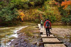 Nature trekking in the Chiba wilderness Chiba, Never Stop Exploring, Japan Travel, Trekking, Wilderness, Nature, Photography, Naturaleza, Photograph