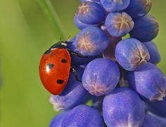 Oh So Gorgeous, Little Ladybug!