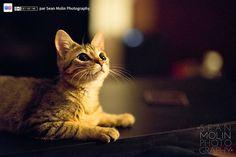 http://www.flickr.com/photos/seanmolin/7028040701/