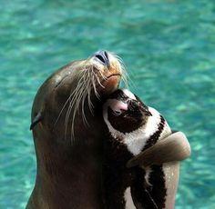 Just a sea lion hugging a penguin