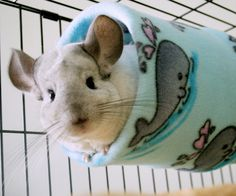 new fleece tubes for the chinchillas (yes, the pets get gifts too).