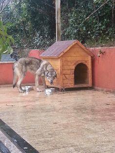 #istanbulkopekeğitimi #instafoto #instlove #Frenchbulldog #gurcandoganer #photo #pansiyon #pet #köpek #köpekpansiyonu #köpekeğitimi #İstanbul #instaphoto