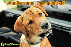 funny-dog-picture-whatta-mean-i-was-adopted