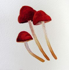 watercolor + mushrooms = ^-^ See more stuffs here: http://colleen-mcnally.tumblr.com/