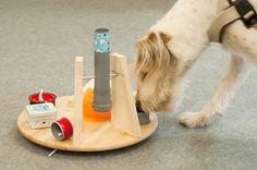 DIY Academy: Futtersuchspiel für Hunde
