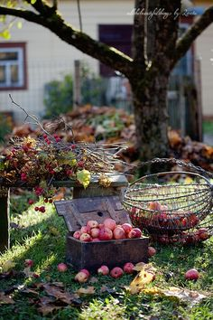this reminds me of my Grandma's yard in the fall...old trees & apples that have been collected...standing by & waiting to be made into good things!
