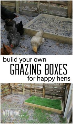 DIY grazing boxes make for happy hens. They're a great way to save on the co… DIY grazing boxes make for happy hens. They're a great way to save on the cost of raising backyard chickens (and other poultry), too! Chicken Toys, Chicken Cages, Chicken Garden, Chicken Life, Backyard Chicken Coops, Diy Chicken Coop, Chicken Ideas, Chicken Feeders, Clean Chicken