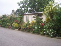 Or would the family home look more like this? The garden certainly looks like something Grace Gillard would have created. Flowering Shrubs, Climbing Roses, Back Gardens, Water Lilies, Tropical Garden, Beautiful Architecture, Home Look, Clematis, Beautiful Islands