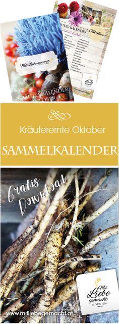 Was gibt es im Oktober zum Sammeln - gratis Download Kräutersammelkalender! #herbst #kräuter #natur #mitliebegemacht #kräuterwissen