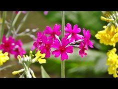Relaxing Bird Song, Nature Sounds & Flowers for Stress Relief, Meditation, Sleep & Study - YouTube