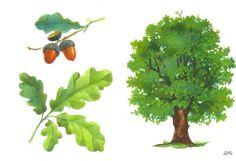 Árvore, folha e fruto