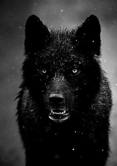 July 2013 became lone wolf. Mother of 2 wolf cubs, and will defend and protect with my life.
