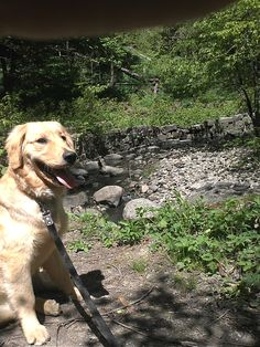 This is why we love Toronto - right in the heart, Sadie Mae takes in the country living in the ravine.