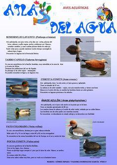 Aves Acuáticas Marina Gómez y Sandra Domínguez 2º F