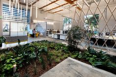 plant in office Espacio de oficina contemporáneo en California Decoracion