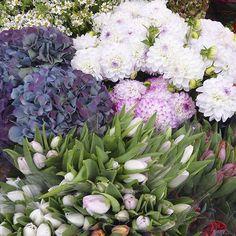 Je vous souhaite une belle semaine  #flowers#fleurs#marche#instaflower #bonnesemaine#